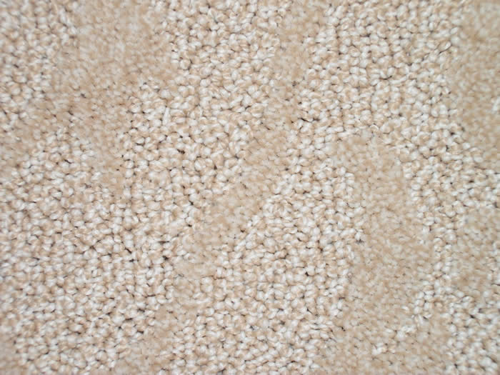 Pattern Carpet for Strongsville Brunswick Elyria Medina
